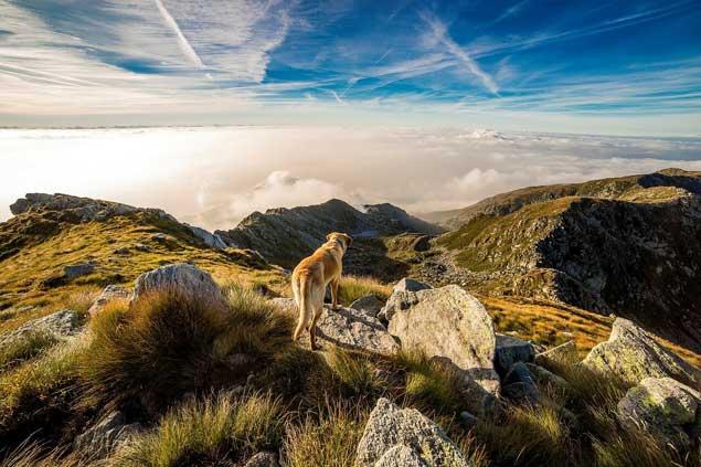 Montagnes avec un animal